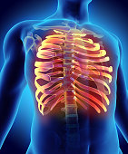 istock 3D illustration of Ribs, medical concept. 619984060