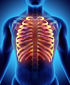 istock 3D illustration of Ribs, medical concept. 619984158