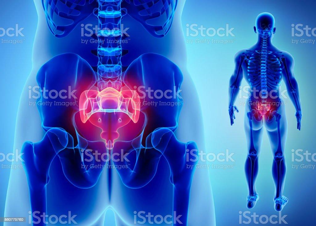 3D illustration of Sacral Spine, medical concept. stock photo