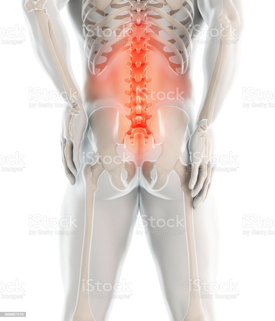 3d Illustration Of Sacral Spine Painful Stock Photo More Pictures