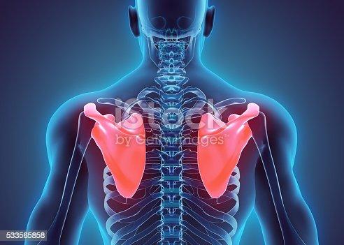 istock 3D illustration of Scapula, medical concept. 533565858