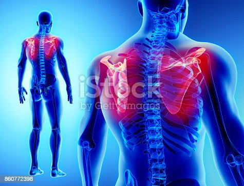istock 3D illustration of Scapula, medical concept. 860772398