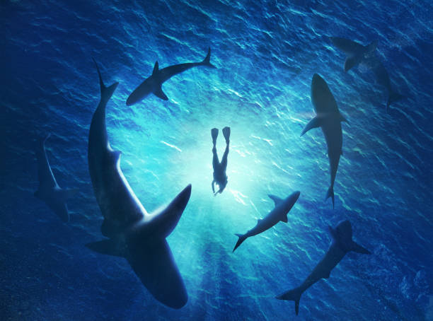 illustration of sharks forming a circle under a man in water - squalo foto e immagini stock