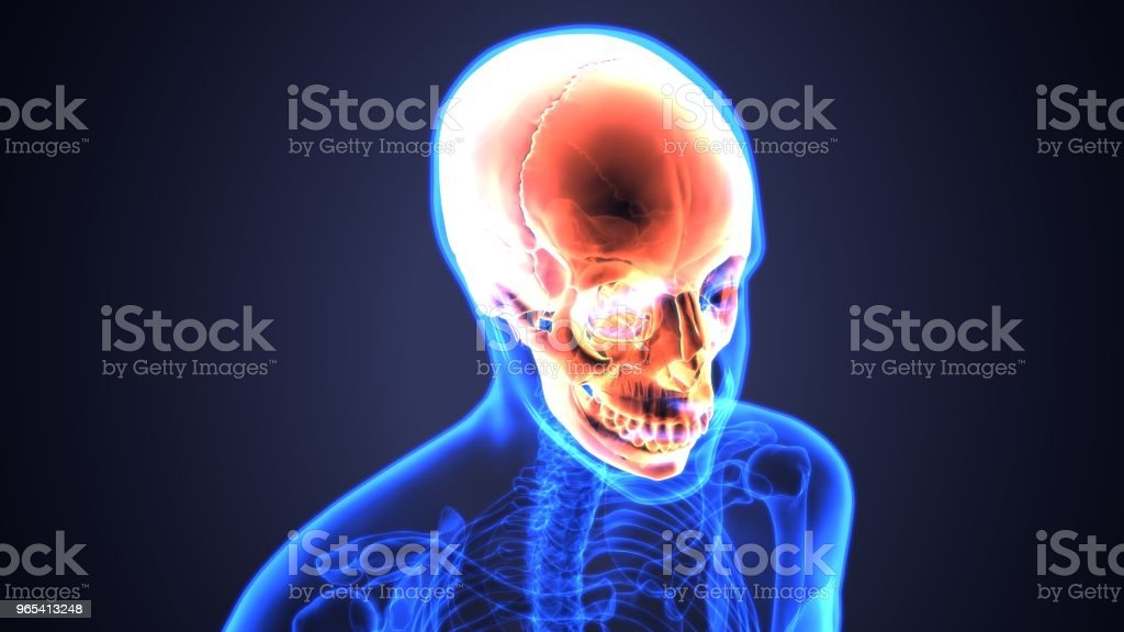 3D illustration of skull anatomy - part of human skeleton medical concept. zbiór zdjęć royalty-free
