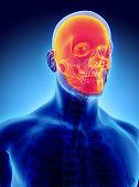 istock 3D illustration of skull anatomy - part of human skeleton. 585054042