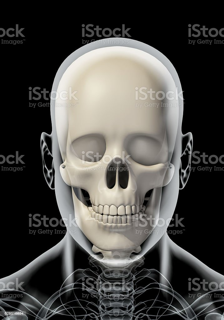 3d Illustration Of Skull Anatomy Part Of Human Skeleton stock photo ...