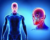 istock 3D illustration of skull anatomy - part of human skeleton. 854103458