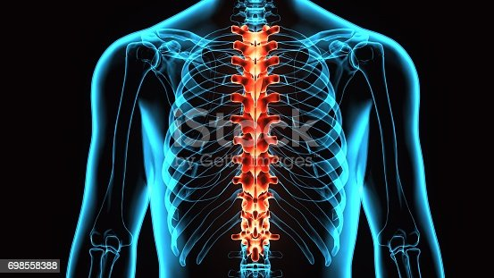 istock 3D Illustration of Spinal cord (Thoracic Vertebrae) a Part of Human Skeleton Anatomy 698558388