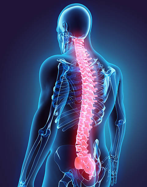 3D illustration of Spine, medical concept. stock photo