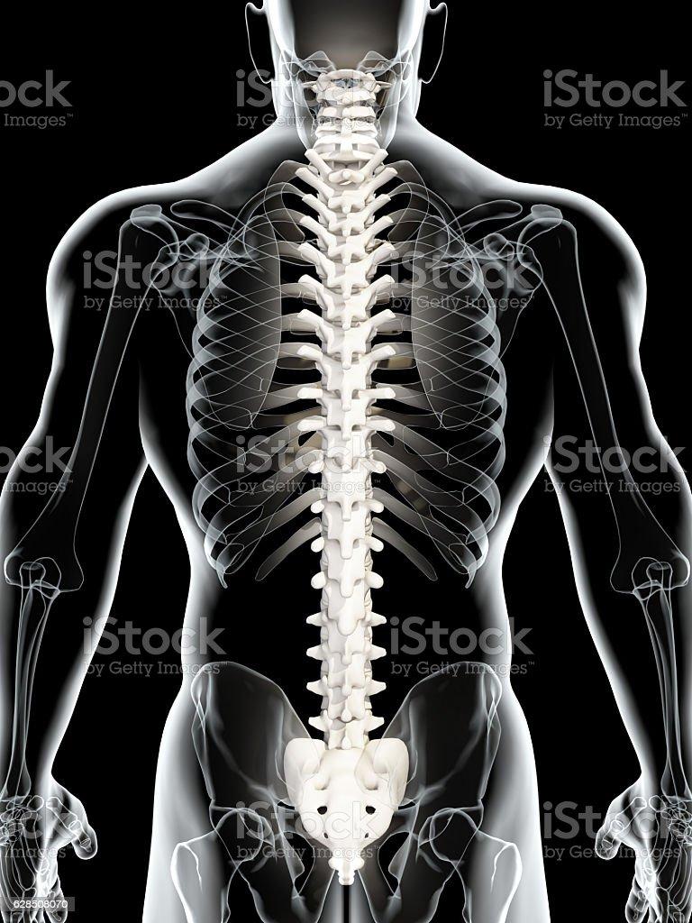 3 D Abbildung Eines Wirbelsäule Medizinkonzept Stock-Fotografie und ...