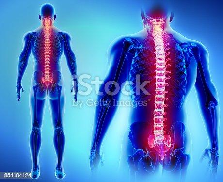 istock 3D illustration of Spine, medical concept. 854104124