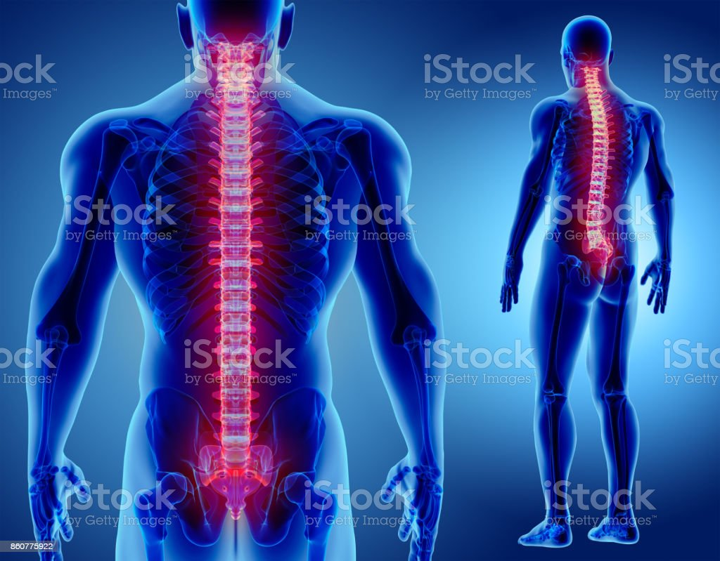 3D illustration of Spine, medical concept. 3D illustration of Spine - Part of Human Skeleton. Anatomy Stock Photo