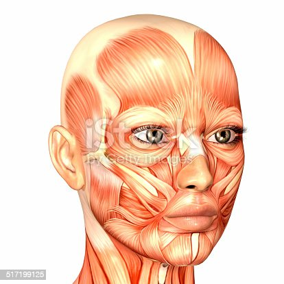 istock Illustration of the anatomy of a female human face 517199125