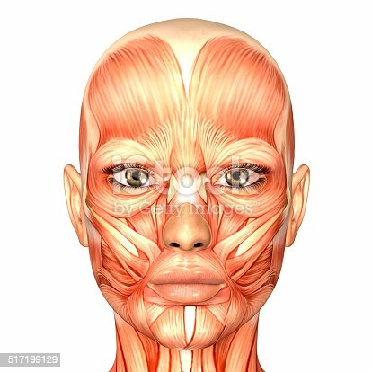 istock Illustration of the anatomy of a female human face 517199129