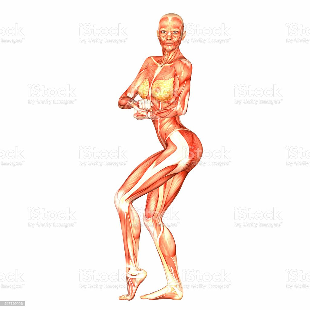 Fotografía de Ilustración De La Anatomía Humana De Que El Cuerpo ...