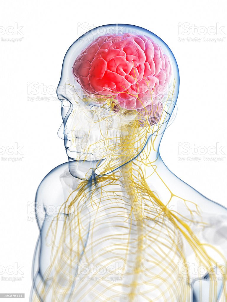 Illustration of the brain neurology of a headache stock photo