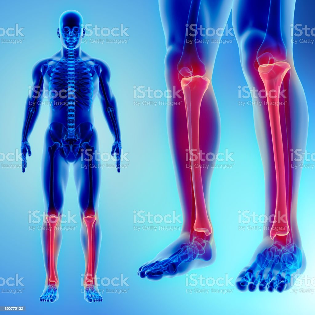 3D illustration of Tibia, medical concept. stock photo