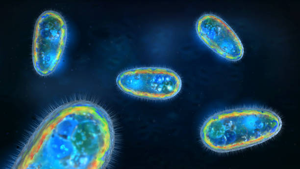 3D illustration of transparent and colorful protozoa or unicellular organism stock photo