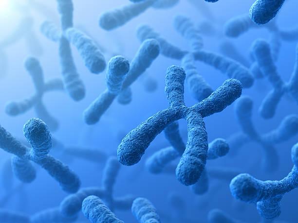 3d illustration of x chromosomes - chromosoom stockfoto's en -beelden