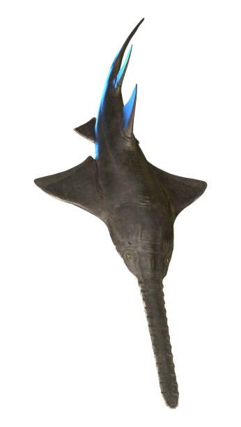 ilustración 3d onchopristis fish onwhite - pez sierra fotografías e imágenes de stock