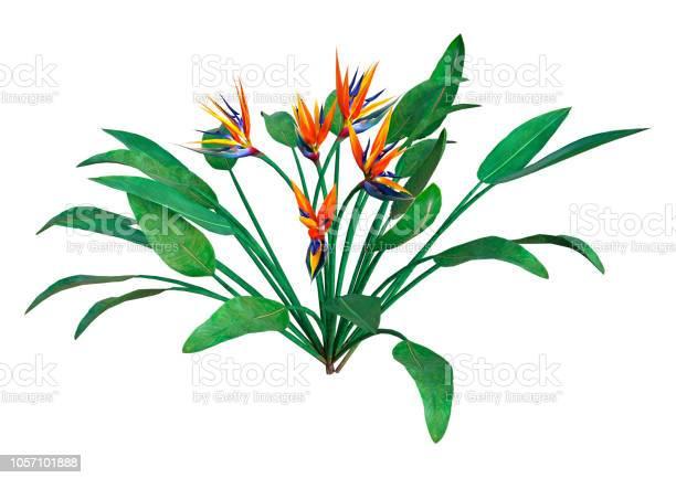 Illustration paradise flower on white picture id1057101888?b=1&k=6&m=1057101888&s=612x612&h=skpwfxnsstvtbzljqno 637nbjhbbyiagmjjvegbqmc=