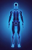 istock 3D illustration Part of Human Skeleton, medical concept. 540378570