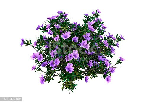 3D rendering of a rhododendron plant with purple flowers isolated on white background