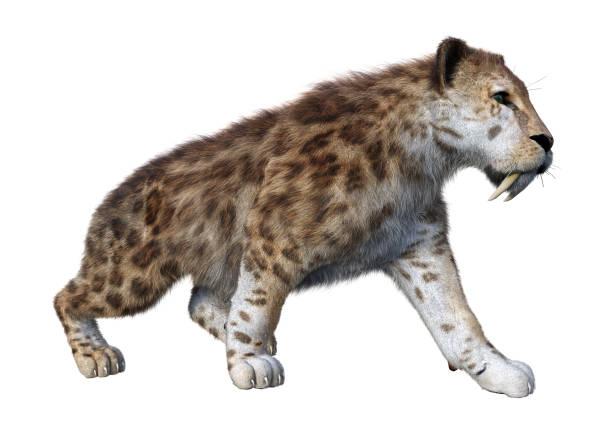 3d illustration sabertooth tiger on white - carnívoro imagens e fotografias de stock
