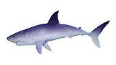 3D illustration shark on white