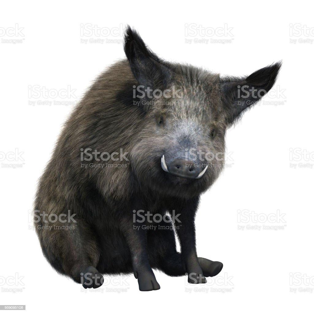 3D illustration wild boar on white stock photo