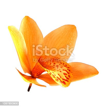 3D rendering of a yellow wild orchid flower isolated on white background