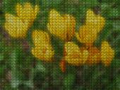 istock Illustrations. Cross-stitch. Saffron, Crocus. 1145957291