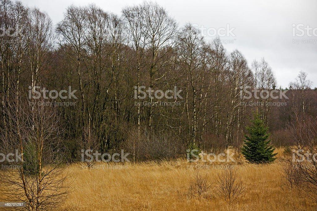 Im Bragphenn royalty-free stock photo