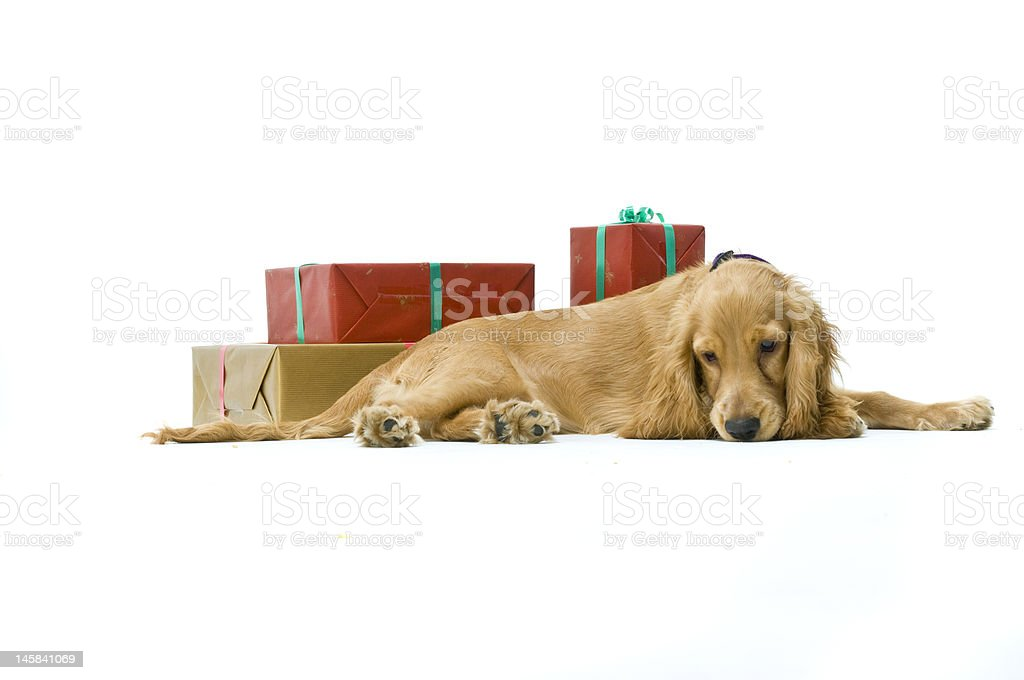 Im Not Just For Christmas! royalty-free stock photo