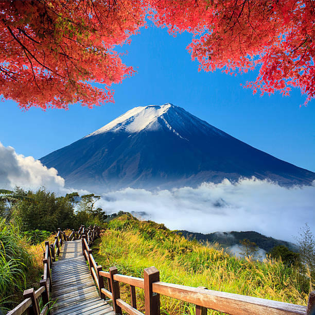 imaaging of beautiful landscape with nice nature color - denali national park bildbanksfoton och bilder