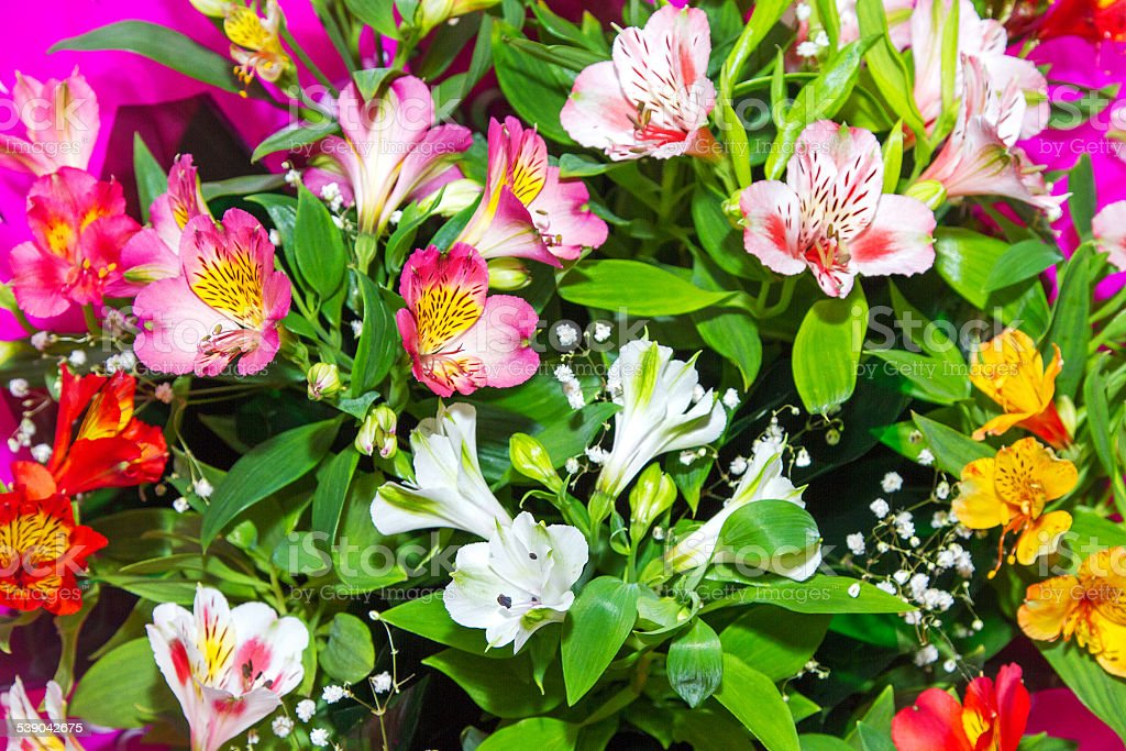 image Floral background from plants Alstroemeria stock photo