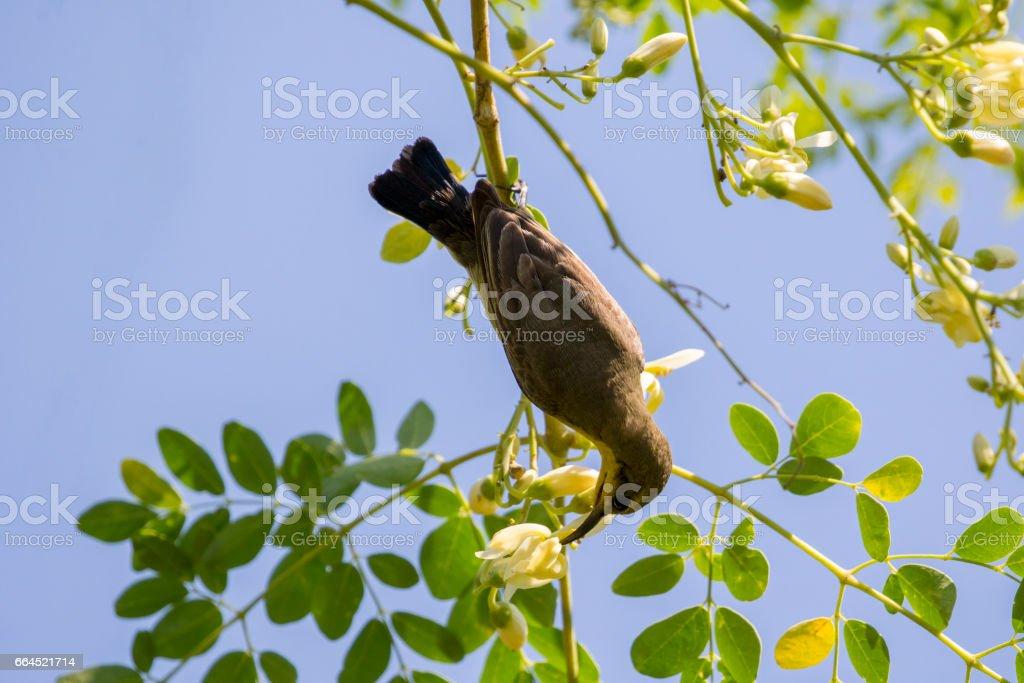 Image of a bird (Olive-backed sunbird, Yellow-bellied sunbird). Wild Animals. stock photo