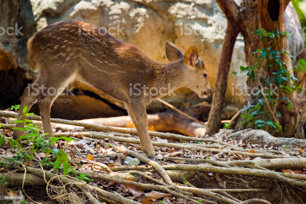 Image of a deer on nature background. wild animals. foto stock royalty-free