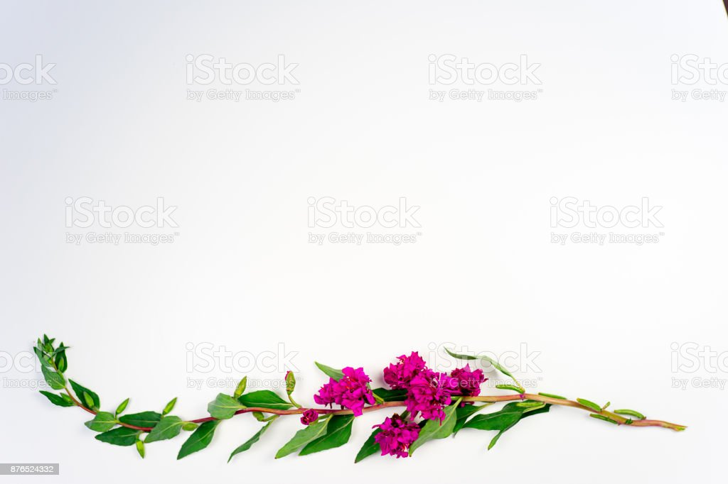 Image Dune Fleur Photos Et Plus D Images De Amour Istock
