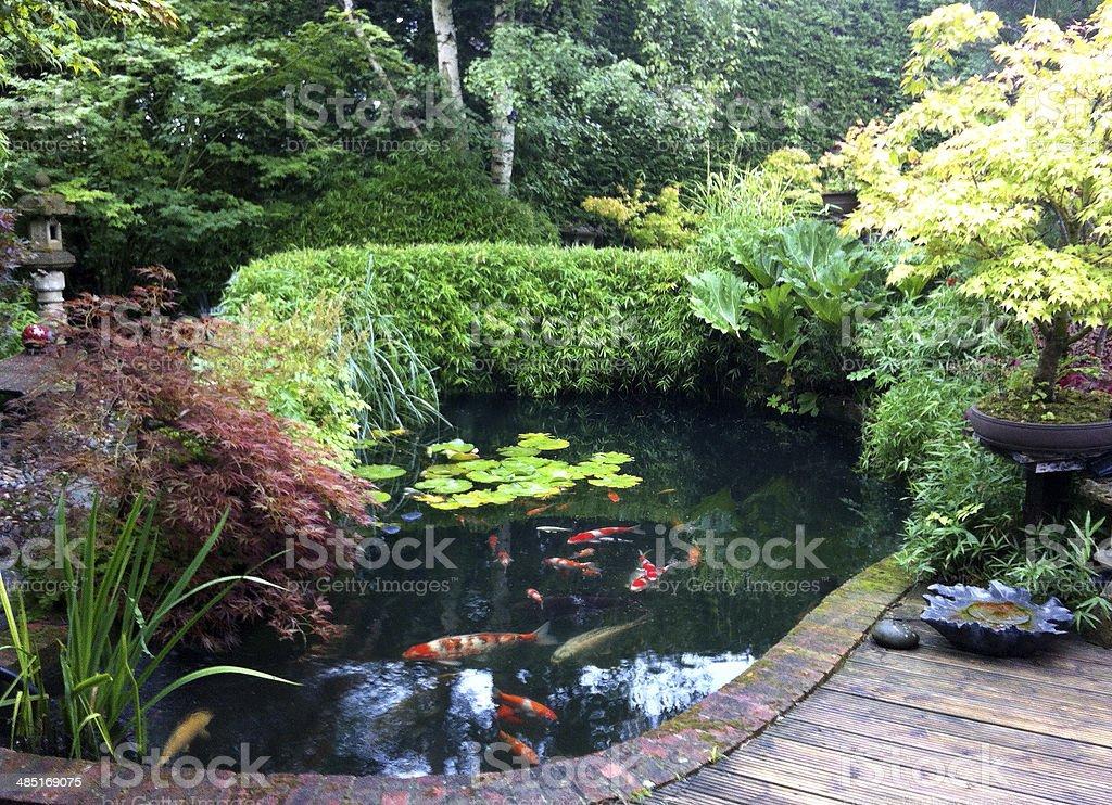 Photo de Image Dun Bassin De Carpes Koï Dans Un Jardin Intérieur ...