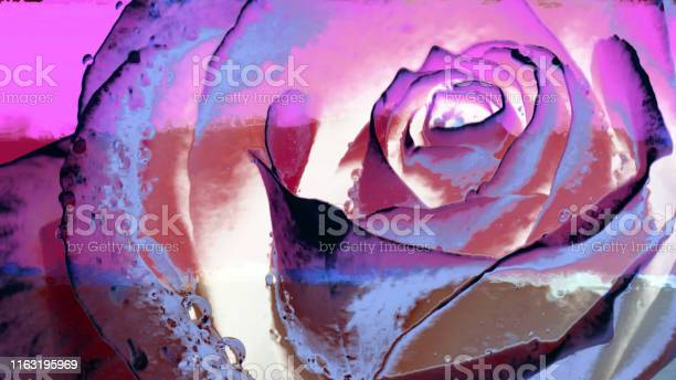 Image of a rose on the wall surface picture id1163195969?b=1&k=6&m=1163195969&s=612x612&h=weugfoobbfrugz7jxabcrgsbwmfozbwsj4jven sopu=