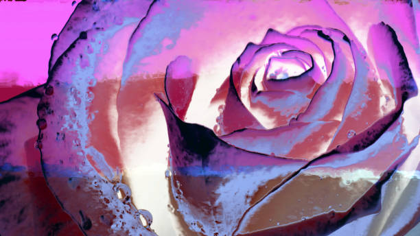Image of a rose on the wall surface picture id1163195969?b=1&k=6&m=1163195969&s=612x612&w=0&h=sxp6u8x 0nm4ehd5e4mclhzn4vyn cgr9fbzzeyrmpa=