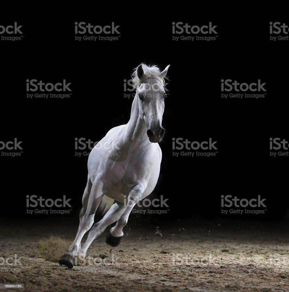 Galloping stallion – Foto