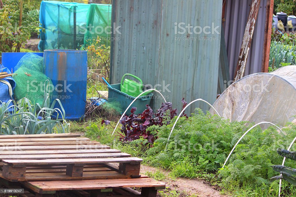Image Of Allotment Vegetable Garden Plants Waterbutts Metalshed ...
