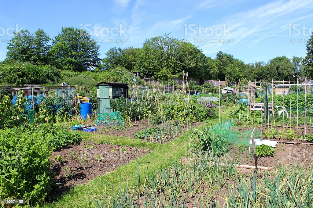 Image of allotment vegetable garden with pathway, plots, peas, beans royalty-free stock photo