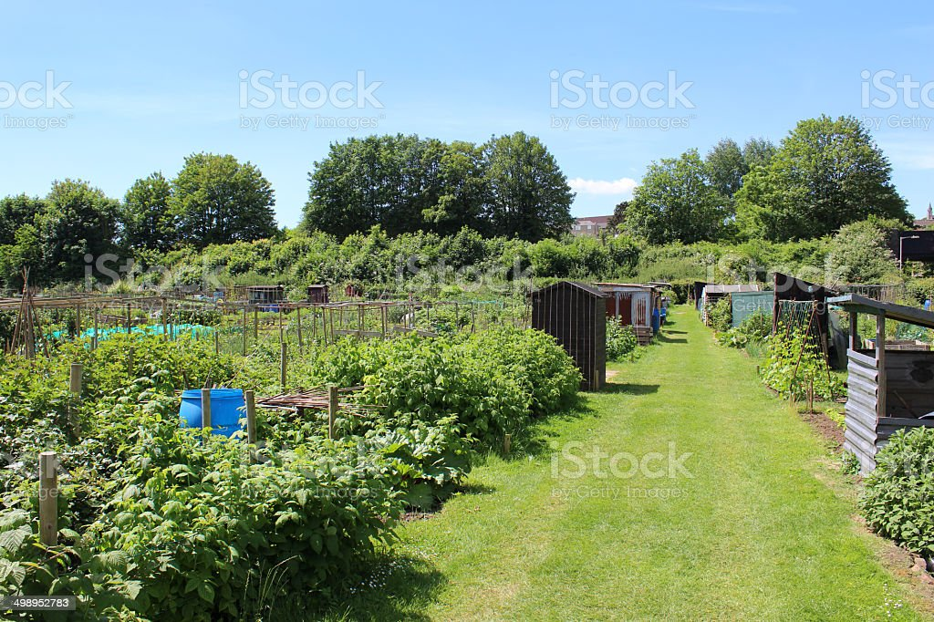 Image of allotment vegetable garden with royalty-free stock photo