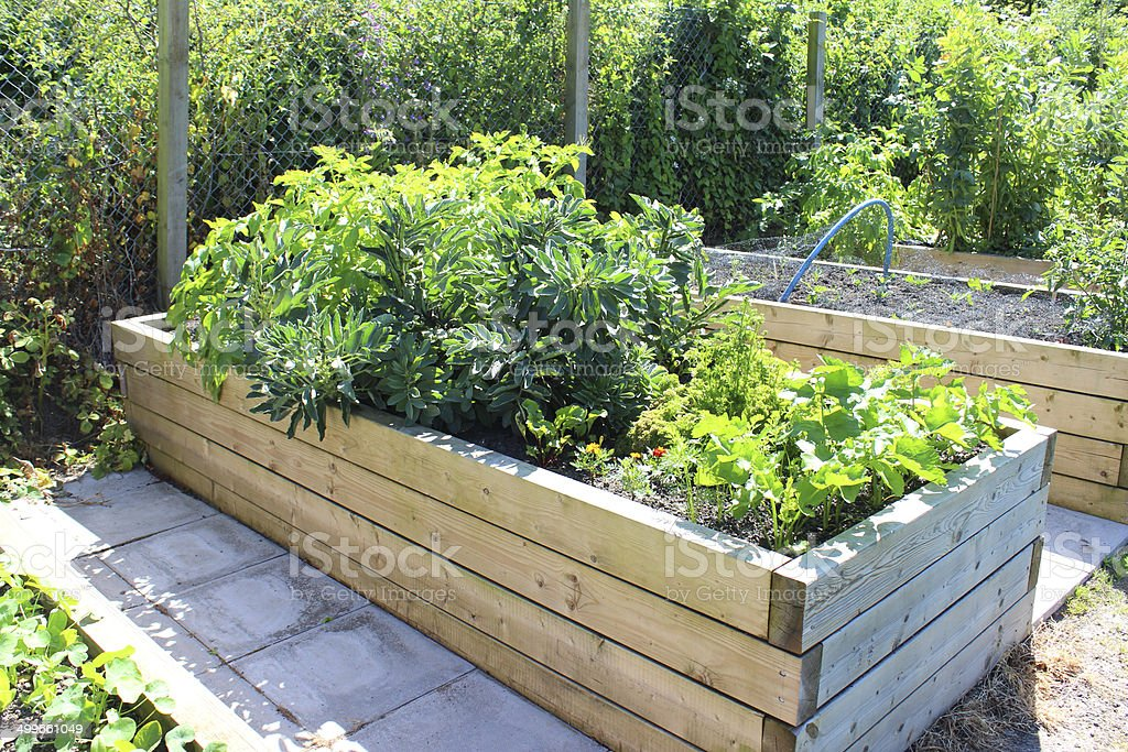 Image Of Allotment Vegetable Garden With Wooden Raised Beds, Timber  Royalty Free Stock Photo