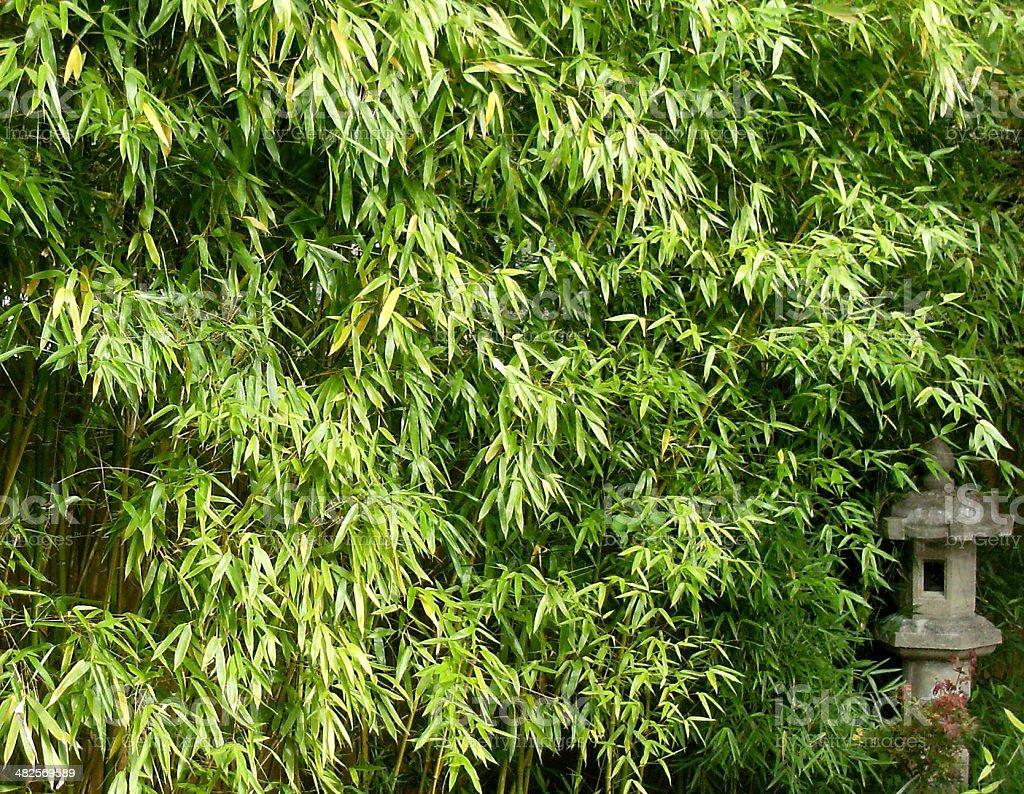 Bambus Hecke bambus hecke bilder und stockfotos istock