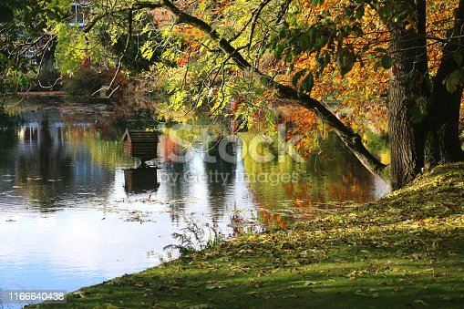 istock Image of beautiful autumn colours reflecting in garden pond with mature common ash tree leaves and fall colours reflections (fraxinus excelsior) growing on riverbank with branches trunks hanging over water surface by green lawn grass needing raking raked 1166640438