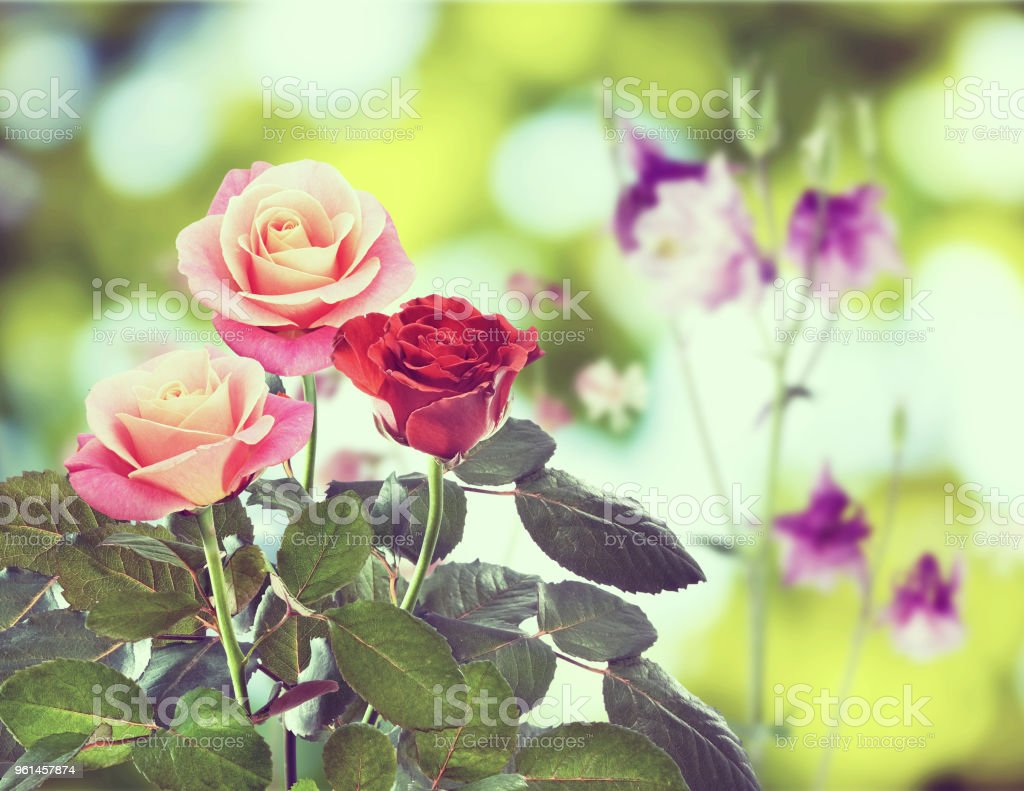 Image of beautiful flowers in a garden close up stock photo more bouquet flower lawn plant rose flower image of beautiful izmirmasajfo